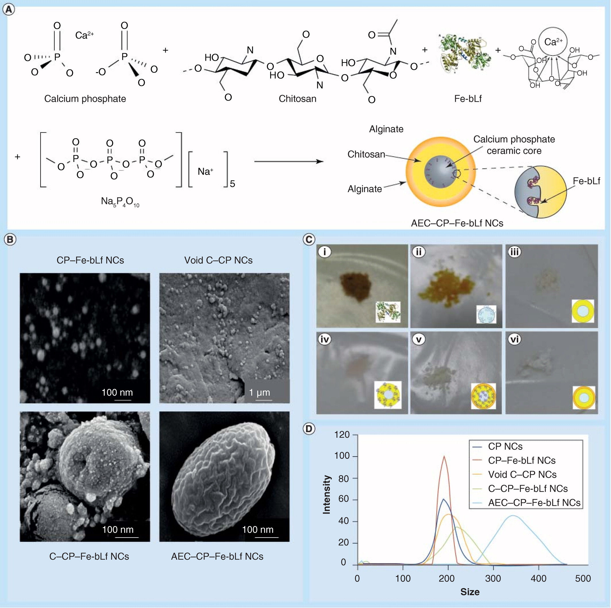 Novel alginate-enclosed chitosan-calcium phosphate-loaded